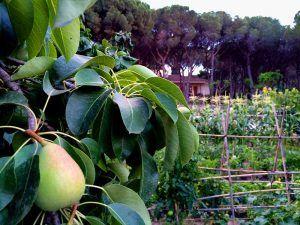 agroindustria-ace-espana-rusia-campo