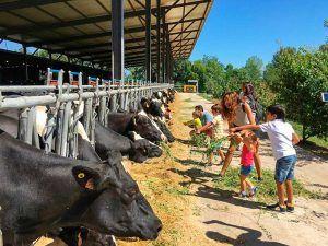 agroindustria-ace-espana-rusia-ganado