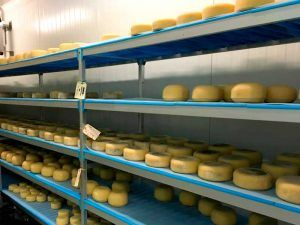 agroindustria-ace-espana-rusia-queso-exportacion